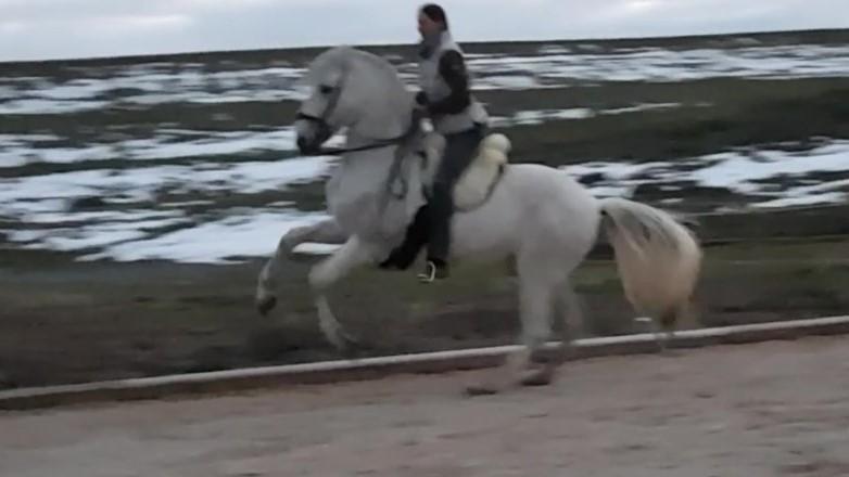 facebook: Riding-in-real-Harmony-Themen-rund-um-das-Pferd